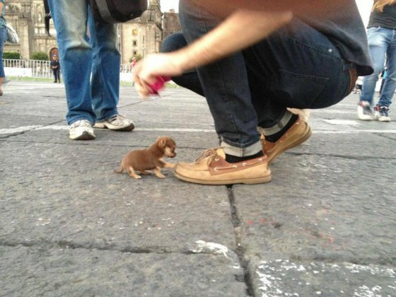 ჟიბის ძაღლი !